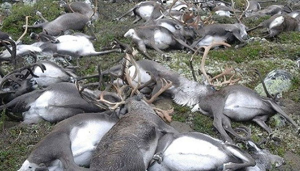Sét lan truyền gây tác hại to lớn cho người và động vật